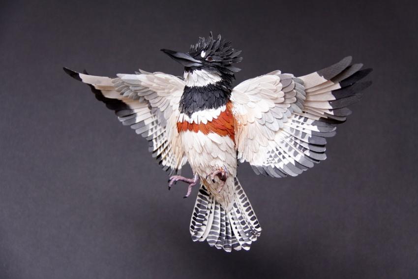 птица4