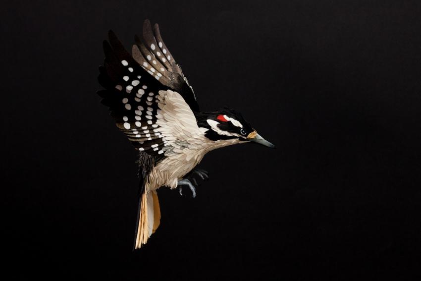 птица3