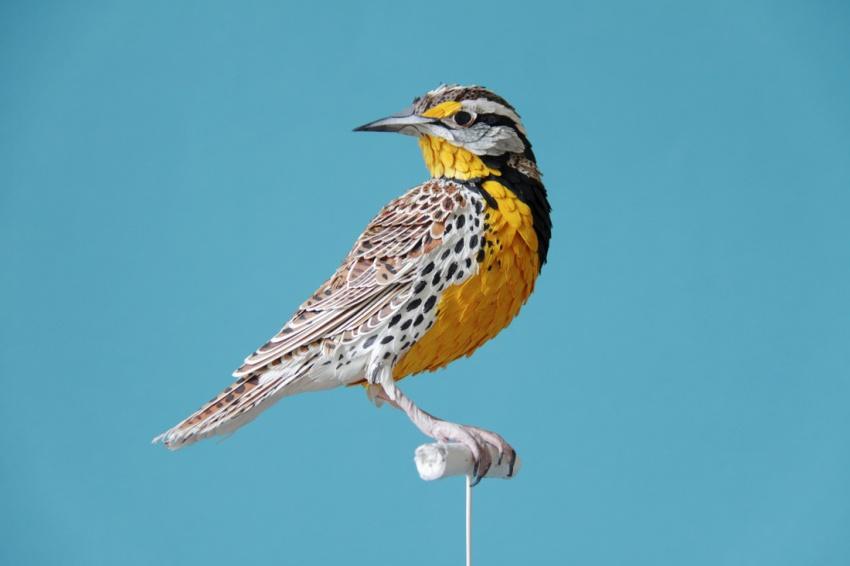 птица1