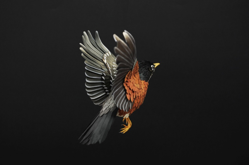 птица6