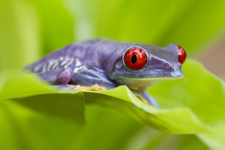 Метод фиолетовой лягушки
