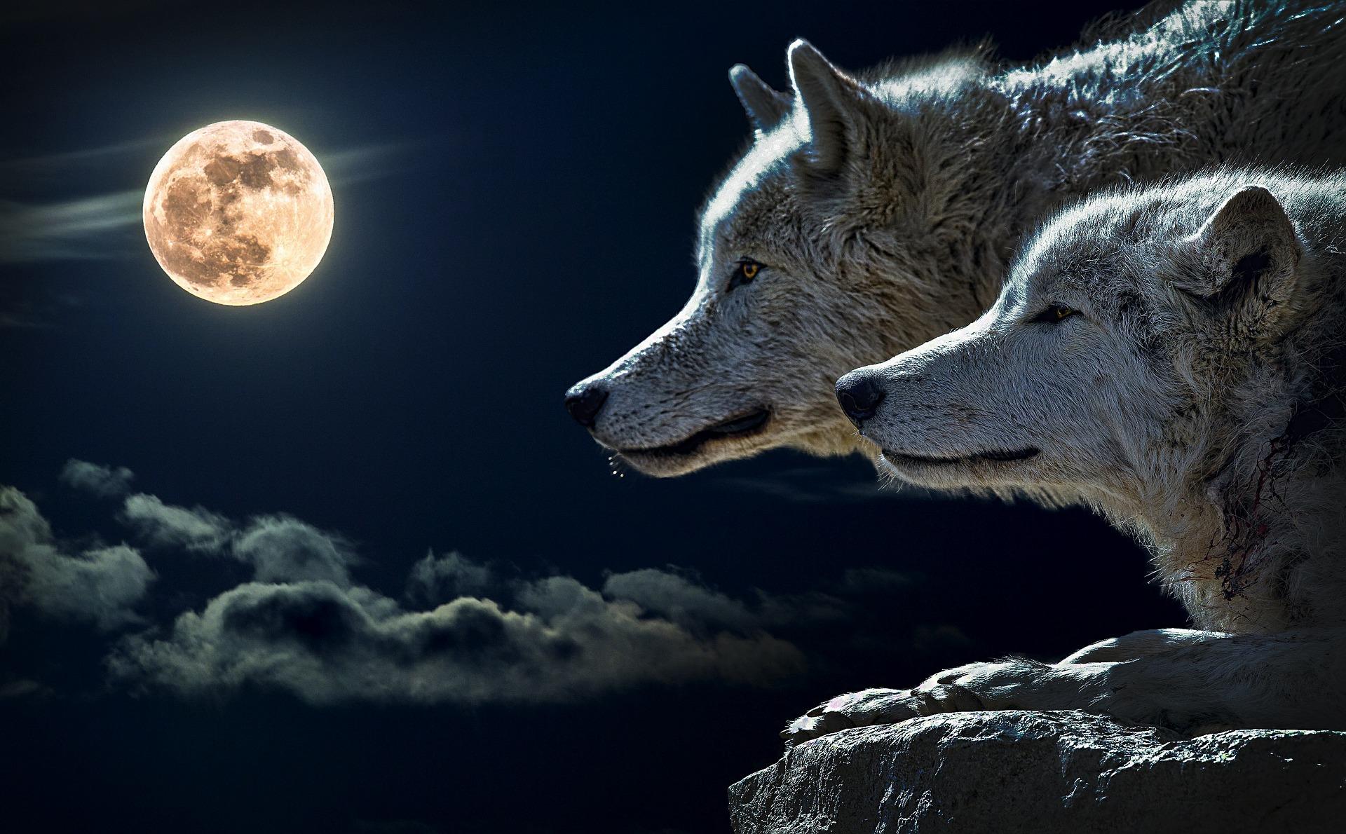 Олег Вещий. Волк